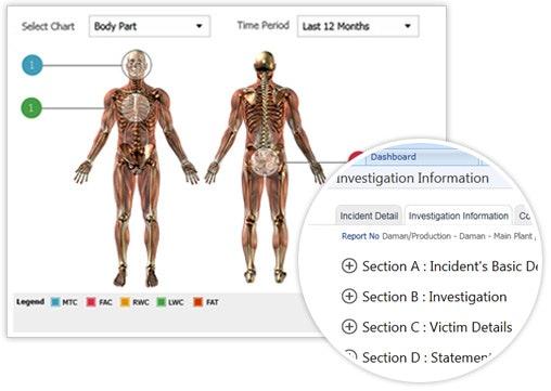 Body part statistical analysis