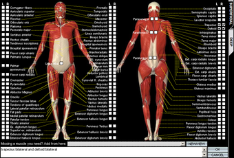 Visual input helper